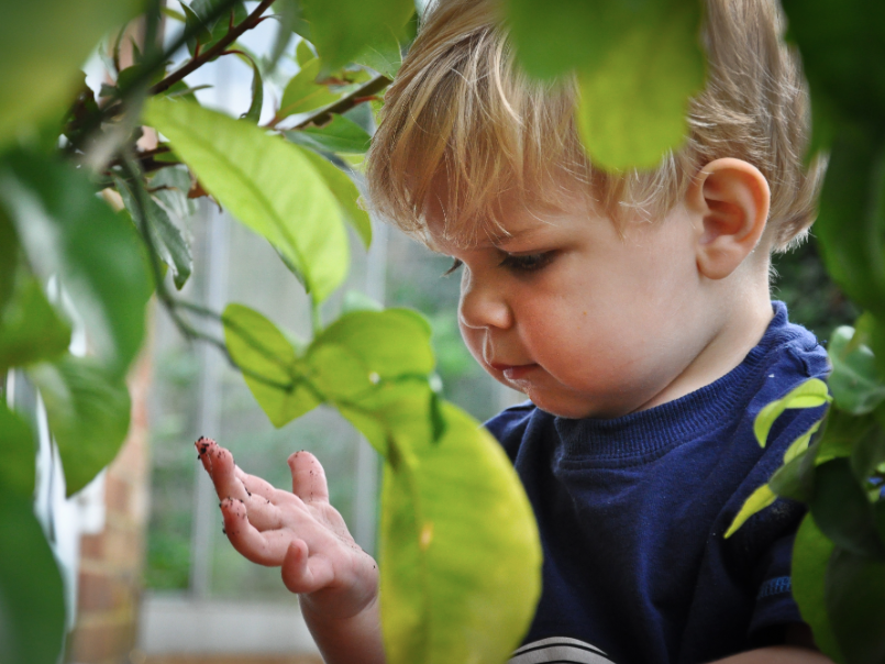 blonde toddler in navy jumper looking at hand surrounded by green leaves