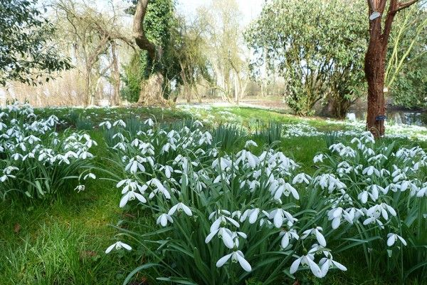 Snowdrops-at-Waterperry_940x627