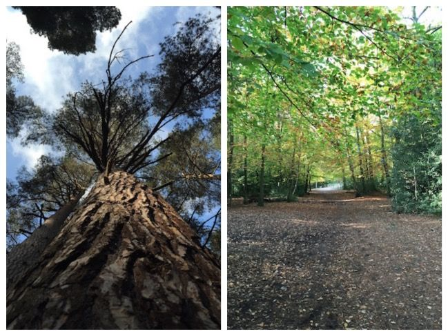 burnham beeches collage