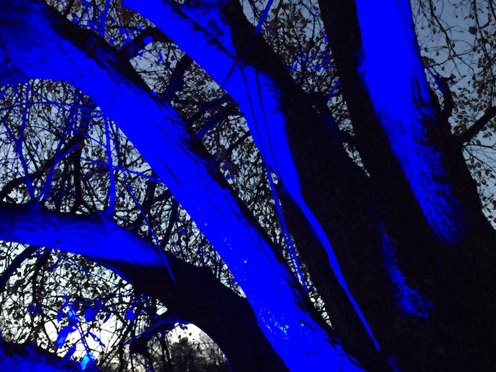 blenheim-palace-blue-trees