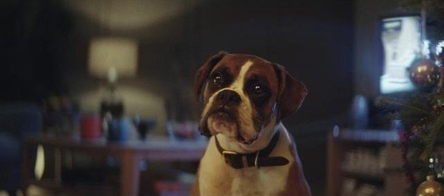buster_the_boxer_-_john_lewis_christmas_ad_07-large_transnjjoebt78qiaydkjdey4cngtjfjs74myhny6w3gnbo8