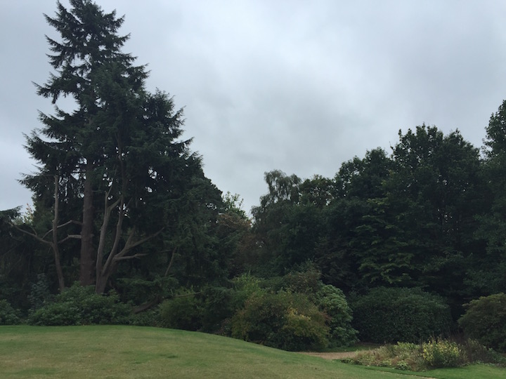 sunningdale-school-grounds-with-trees