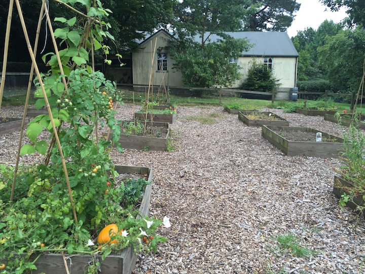 The veggie garden, backing onto the church