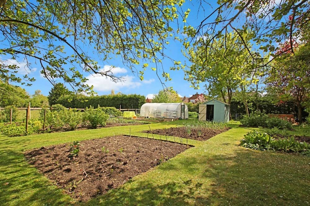 garden allotment with green house and shed