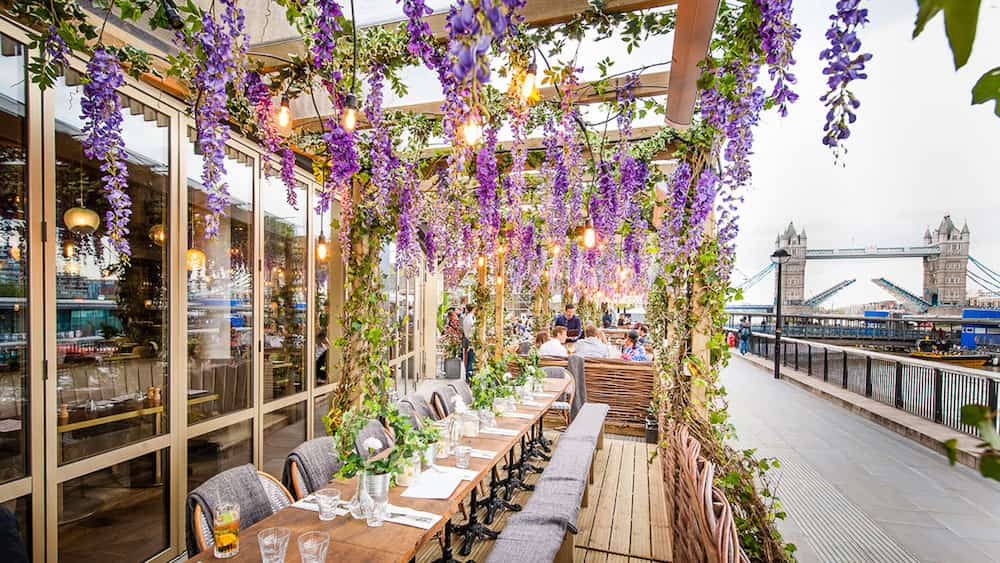 wisteria from a pergola and riverside seating with a pavement and Tower Bridge in the background