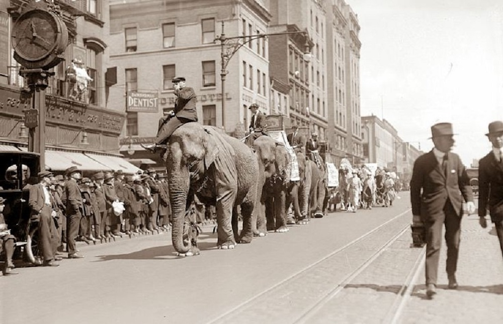 old sepia photo man riding elephant through street