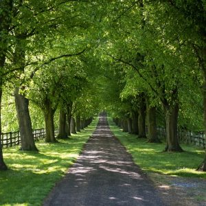 path going through wood of green trees