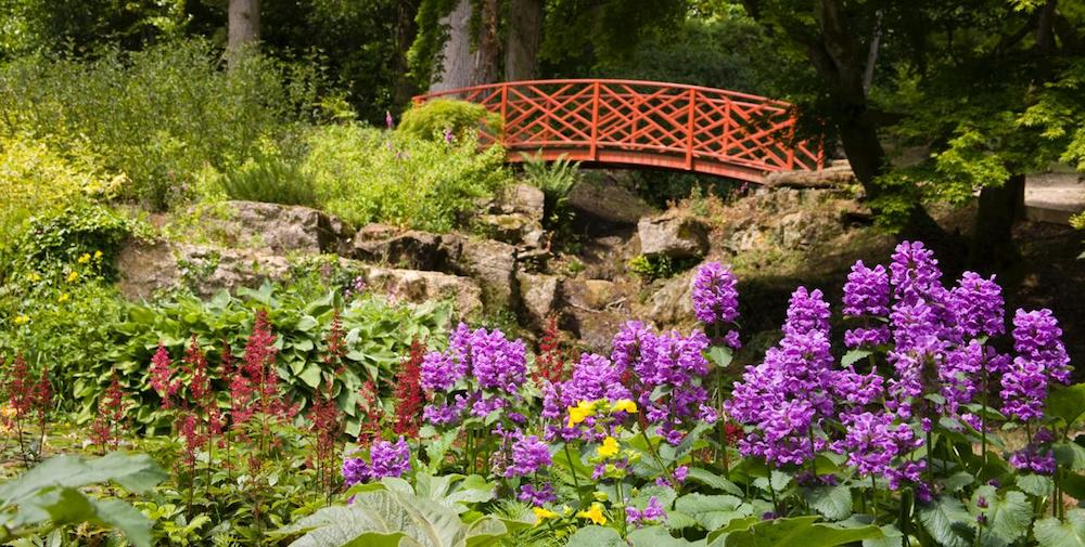red bridge over lake purple flowers