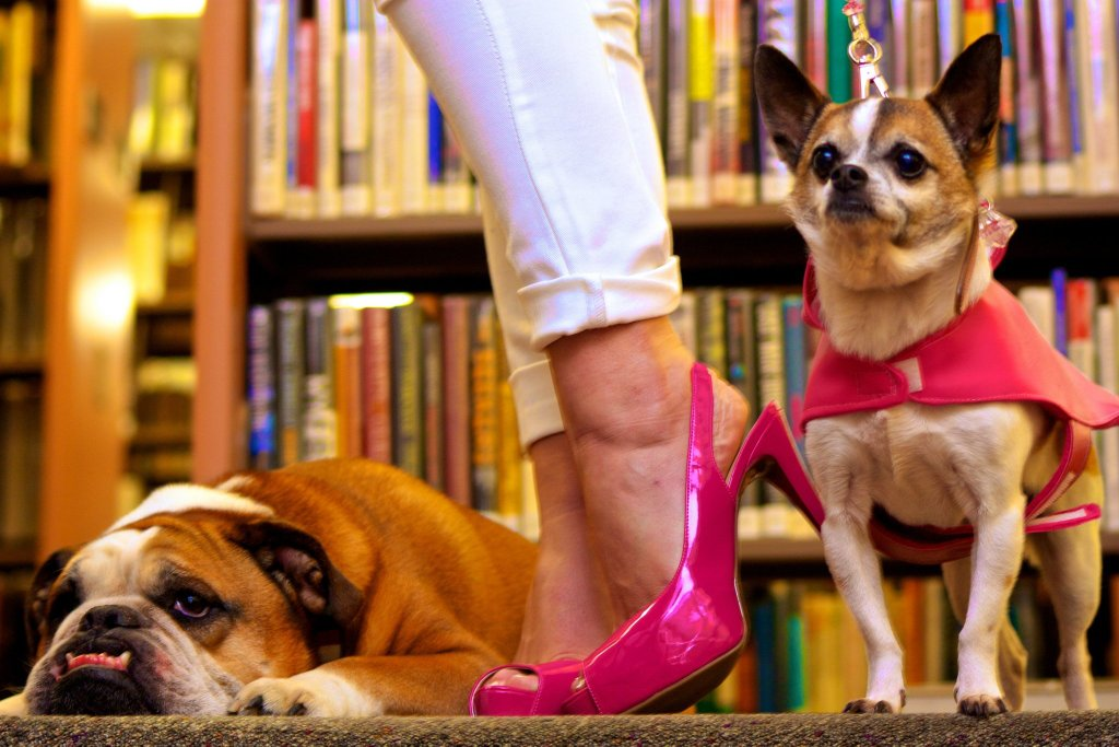 pink stilettos with a pug dog and a small dog on a lead