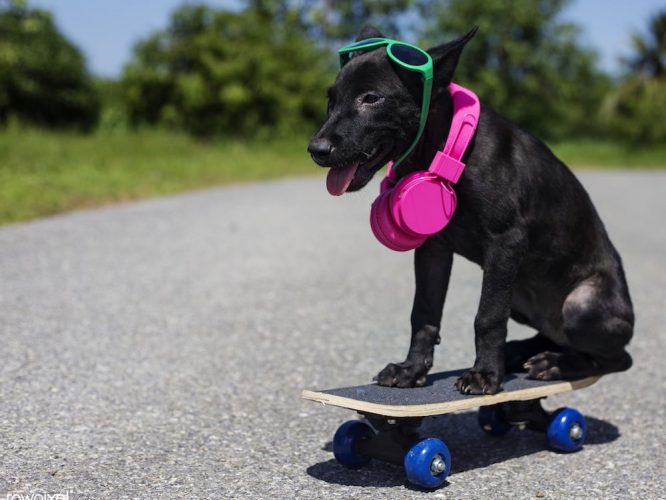 black dog on skateboard wearing green sunglasses pink headphones trees background