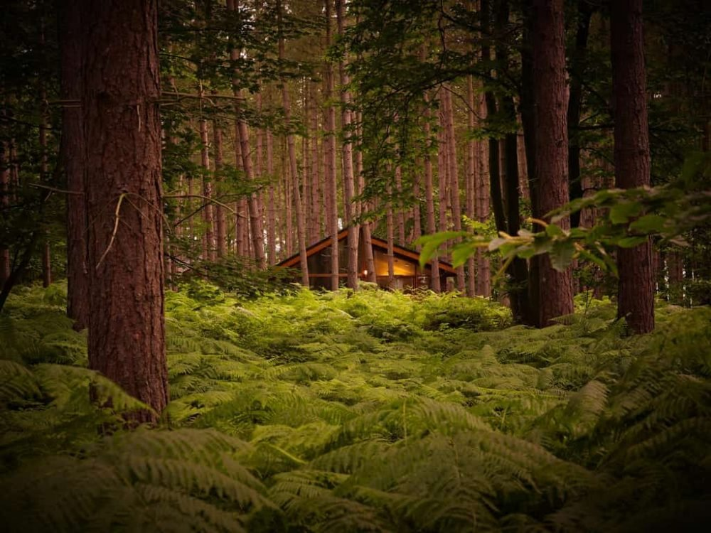 forest holidays luxury log cabins amongst tall trees