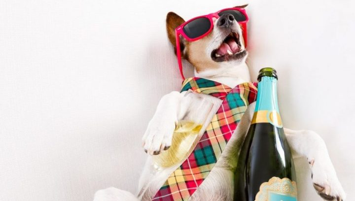 dog against white background with pink sunglasses bottle of alcohol and checkered tie