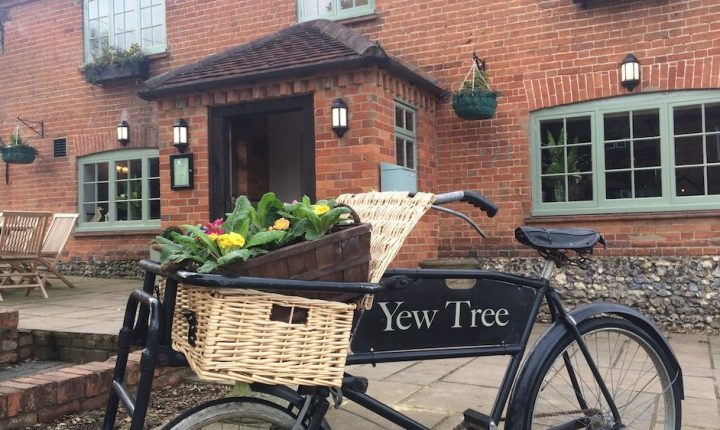 Yew tree exterior bicycle