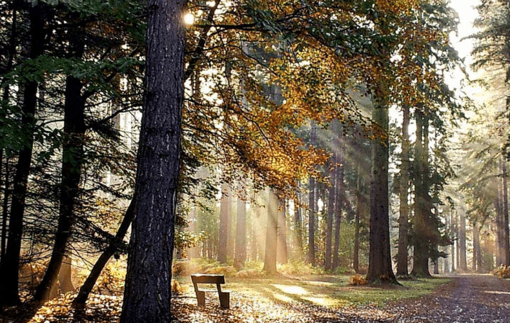 forest with high trees and a bench in the foreground with sun coming through the leaves