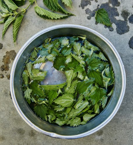Nettle recipes from The Pig Book