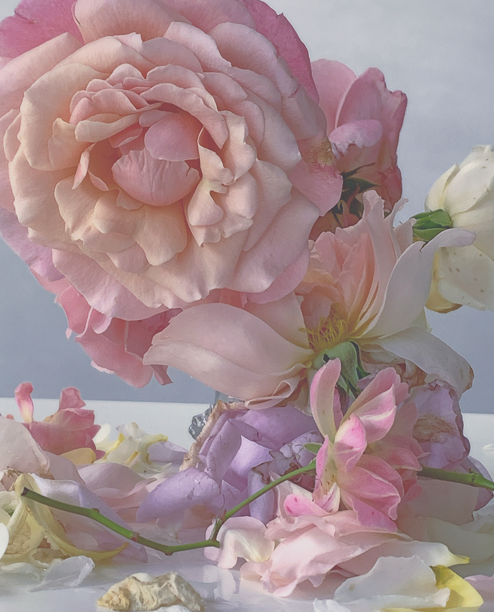 Photographer Nick Knight pale pink and lilac roses Waddesdon Exhibition